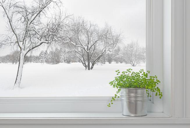 Цветята през зимата