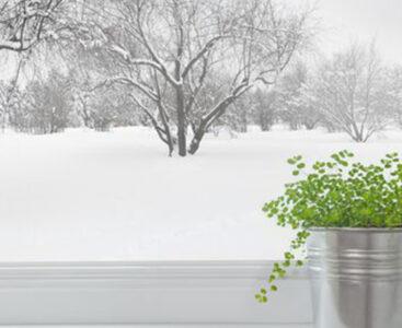 Как да се грижим за стайните растения през зимата – част първа