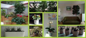 Идеи за интериора - цветя за офиса