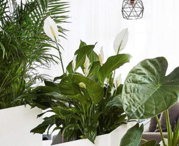 Растенията – естествен овлажнител на въздуха