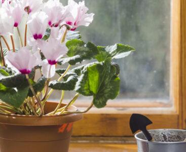 Грижи за растенията в офиса през есента