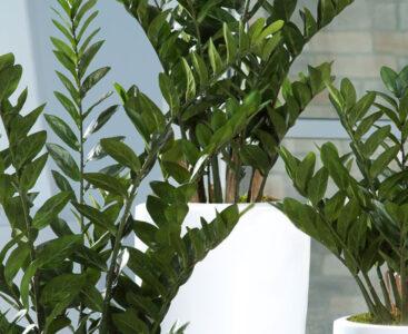 Непретенциозни растения за офиса