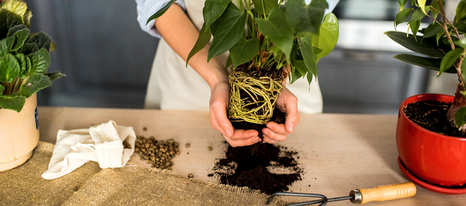 Първа помощ за растенията в офиса
